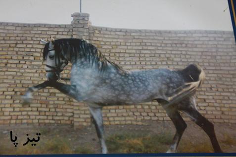 قیمت اسب های سوارکاری